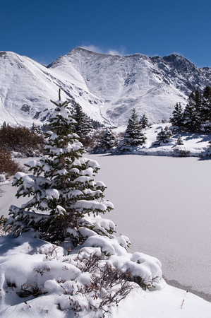 Evergreens on a Wintry Lake
